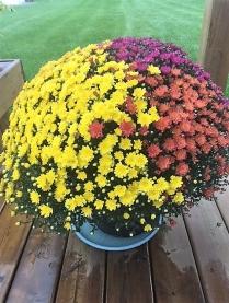 IMG_1447 (002) cvete fall